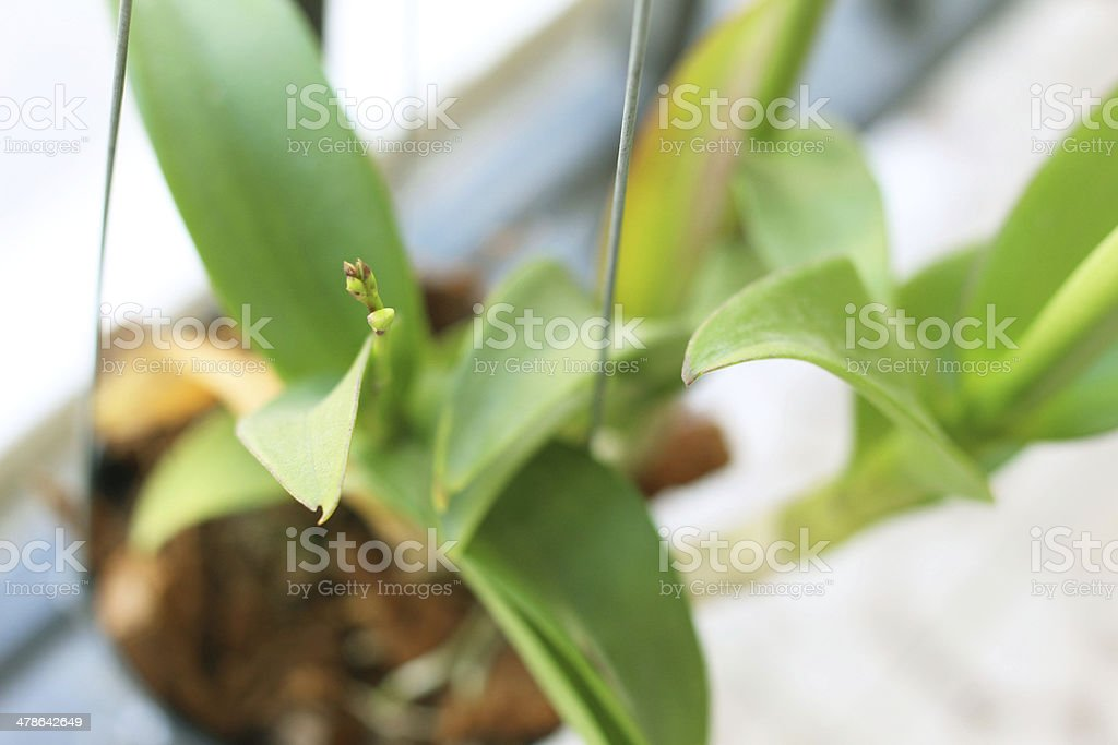 the baby orchid stock photo