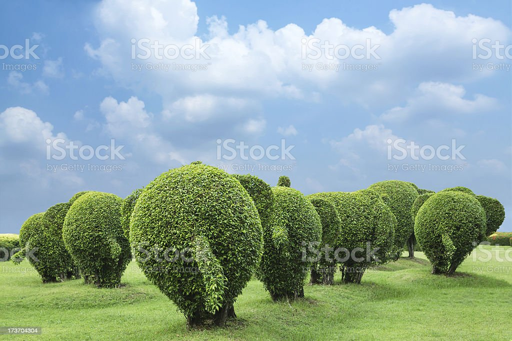 the back of elephant tree royalty-free stock photo