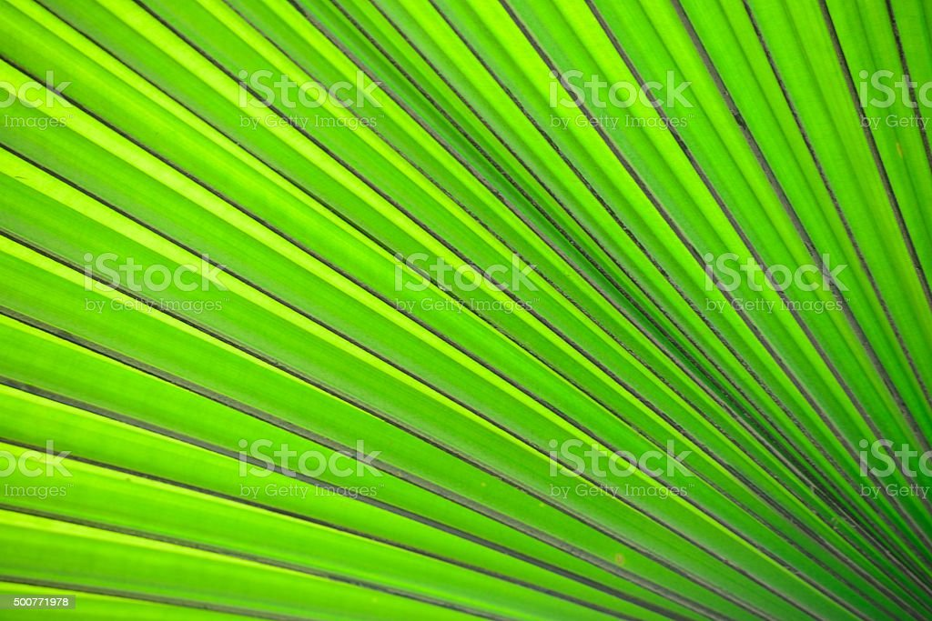 The back of the green leaf stock photo