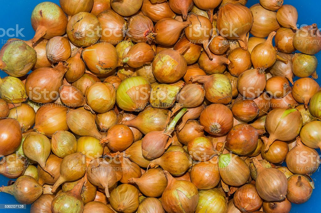The background of small onions closeup stock photo