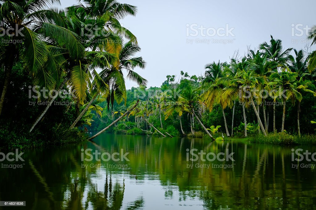 The Backwaters-Kerala stock photo