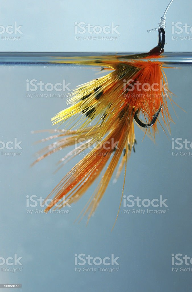 The bait royalty-free stock photo