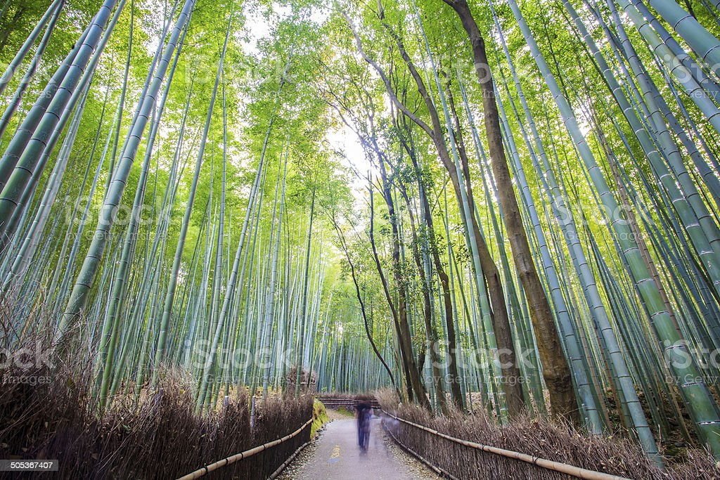 The bamboo forest of Kyoto, Japan stock photo