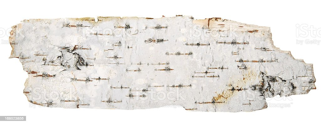 The bark of a birch tree on a white background stock photo