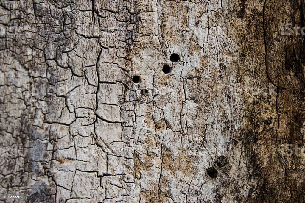 The bark of the tree. Texture. Pattern. Background. stock photo