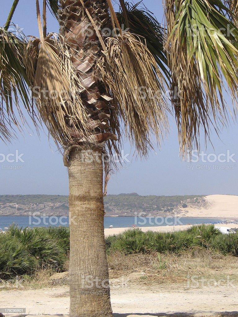 'The Beach of Bolonia, Spain' stock photo