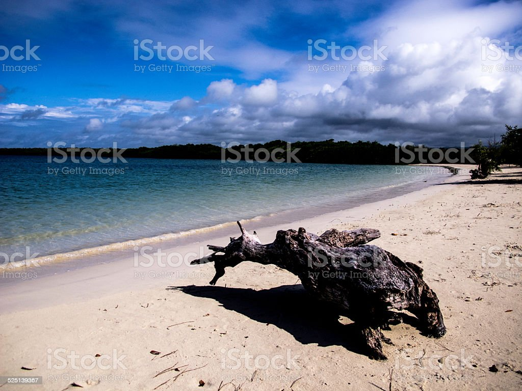 The beach of Tortuga Bay in Galapagos stock photo
