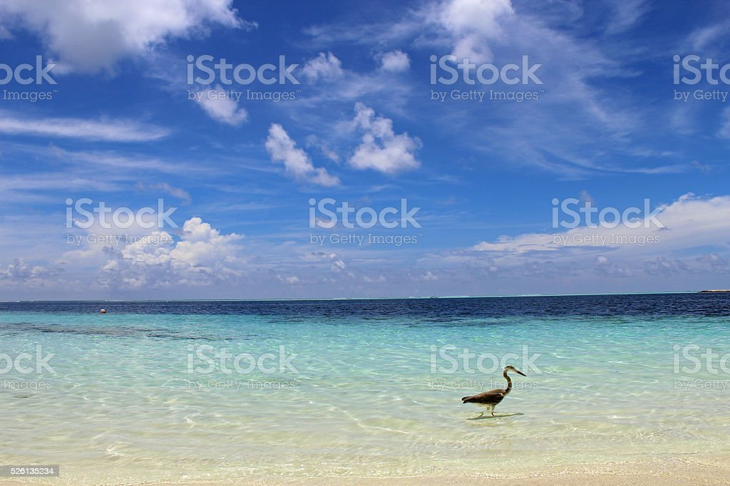 The Beach stock photo