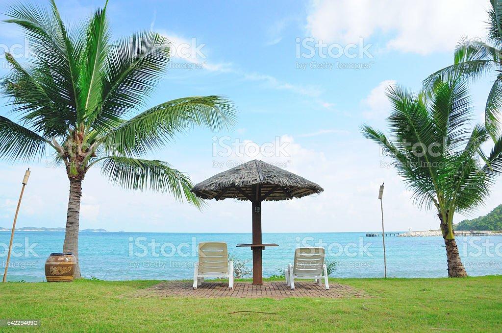 The Beach with Coconut Tree stock photo