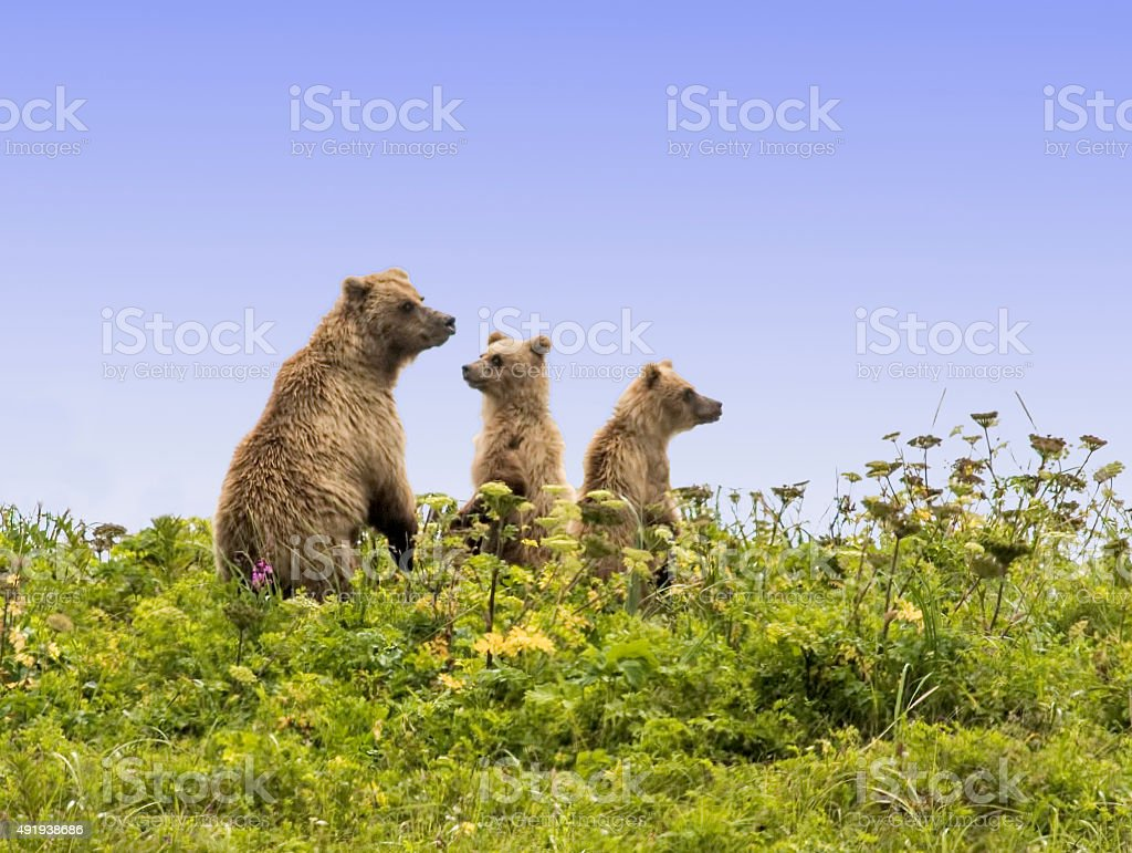 The Bear Skyline stock photo