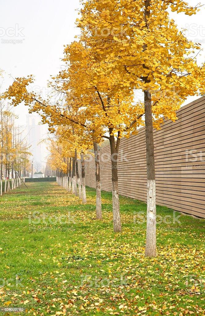 The beautiful autumn in Xian city stock photo