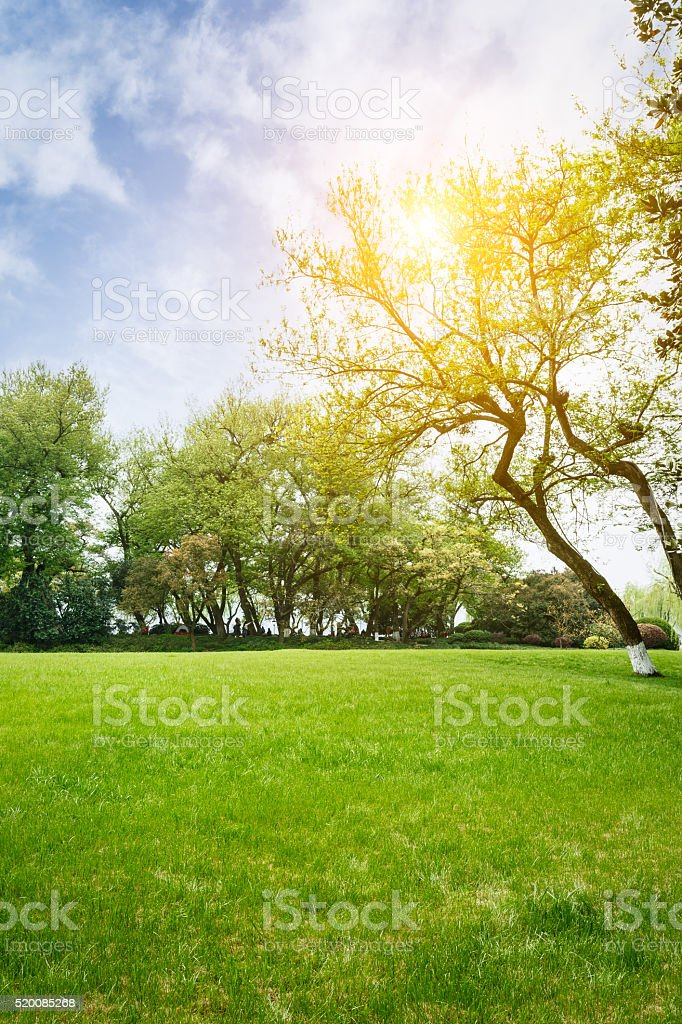The beautiful green lawn in the spring park stock photo