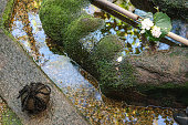 The beautiful spot garden of japanese residence