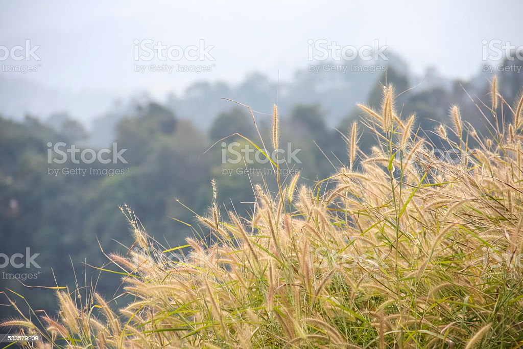 The beauty of nature royalty-free stock photo