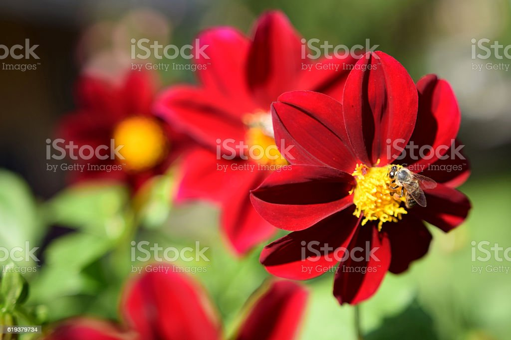 The bee on a flower stock photo