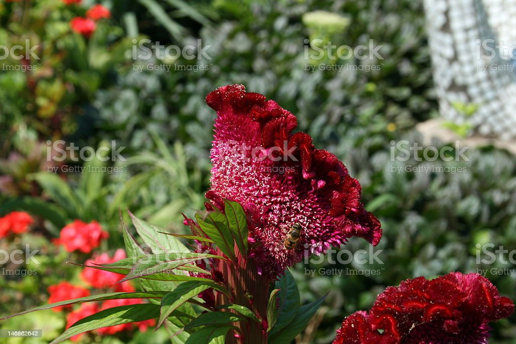 The bee sits on an exotic flower royalty-free stock photo