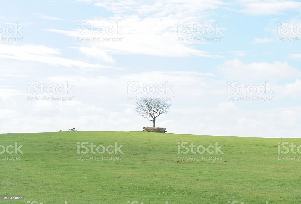 The Beech tree memorial on Cleeve Common in the Cotswolds stock photo