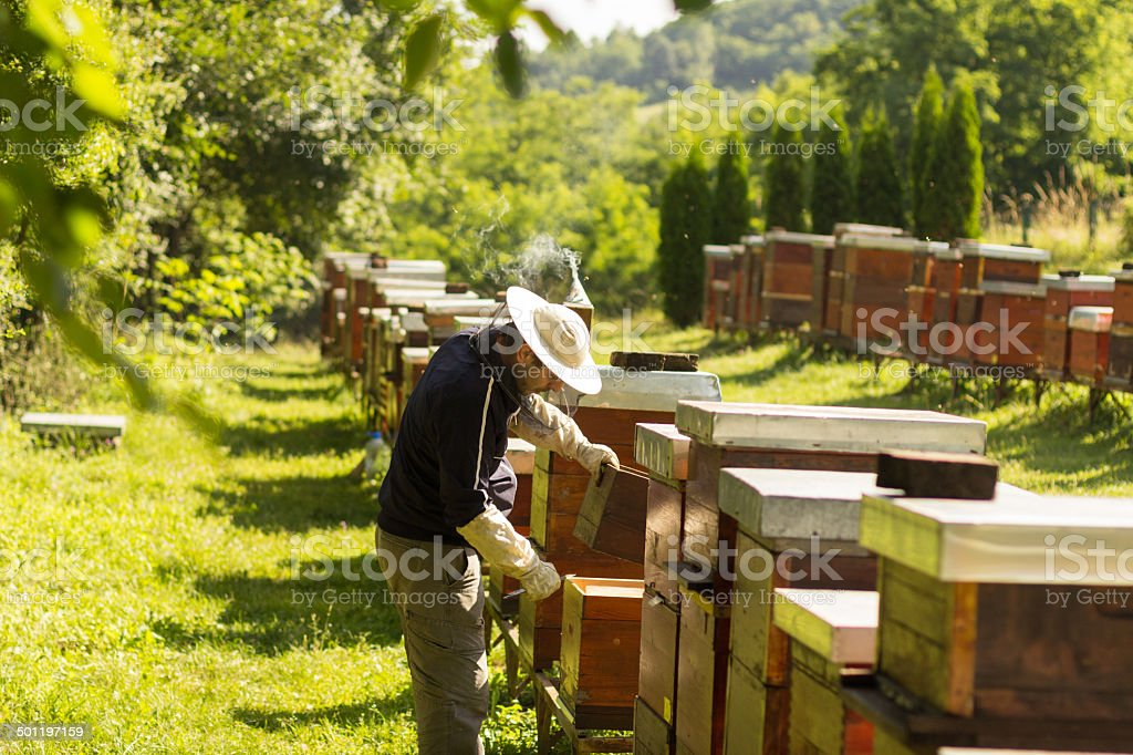 The beekeeper has control over a framework with honey royalty-free stock photo