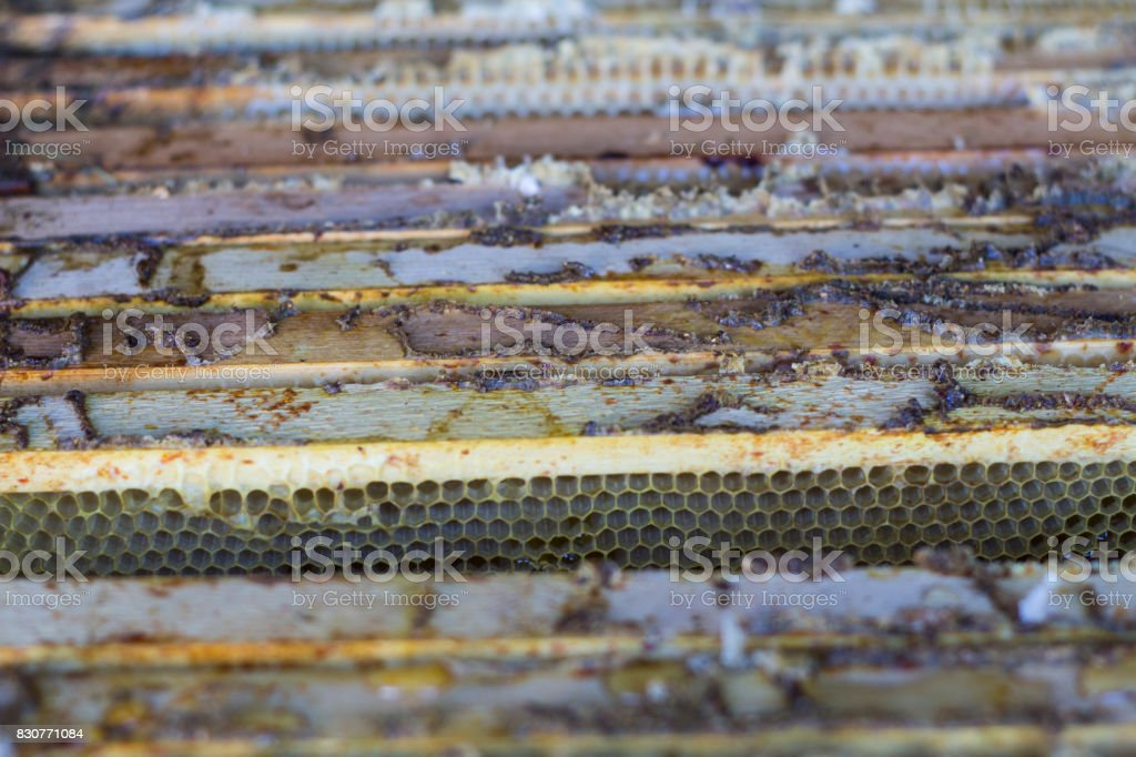 The beekeeper opens the hive, the bees checks, checks honey. stock photo