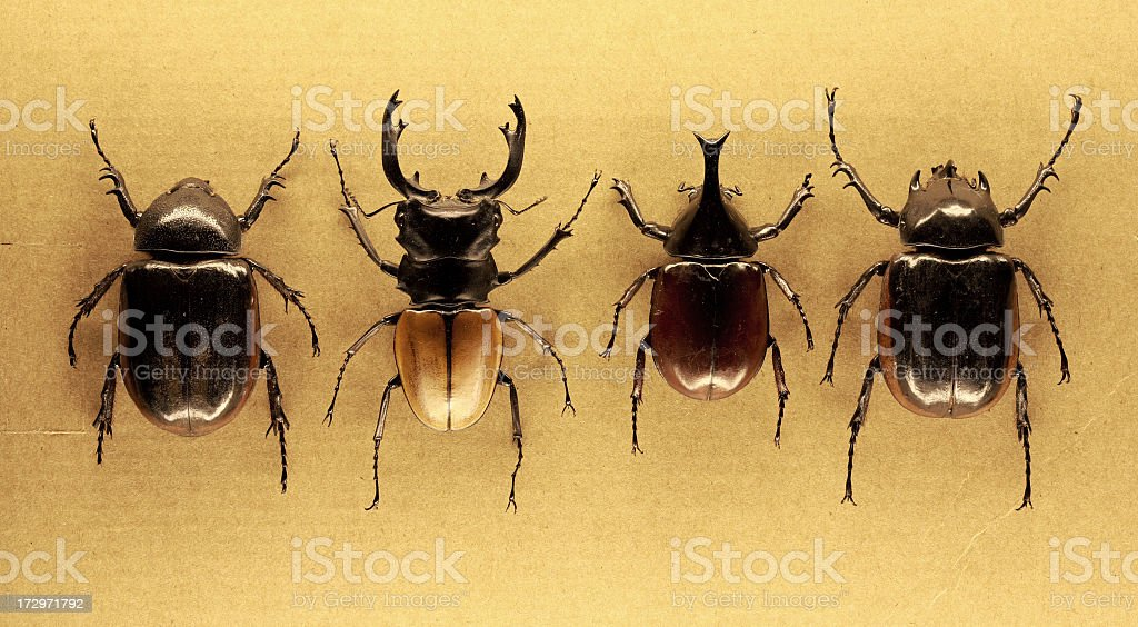 the beetles are back royalty-free stock photo