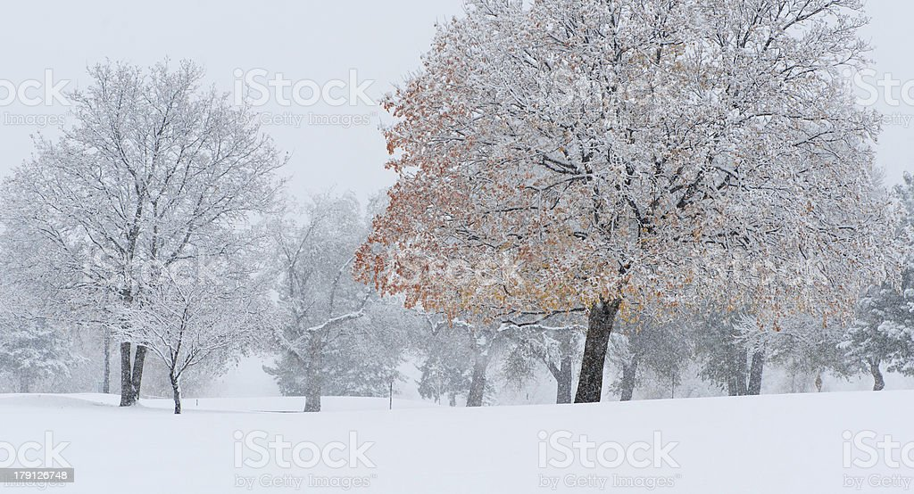 The Beginning of Winter royalty-free stock photo