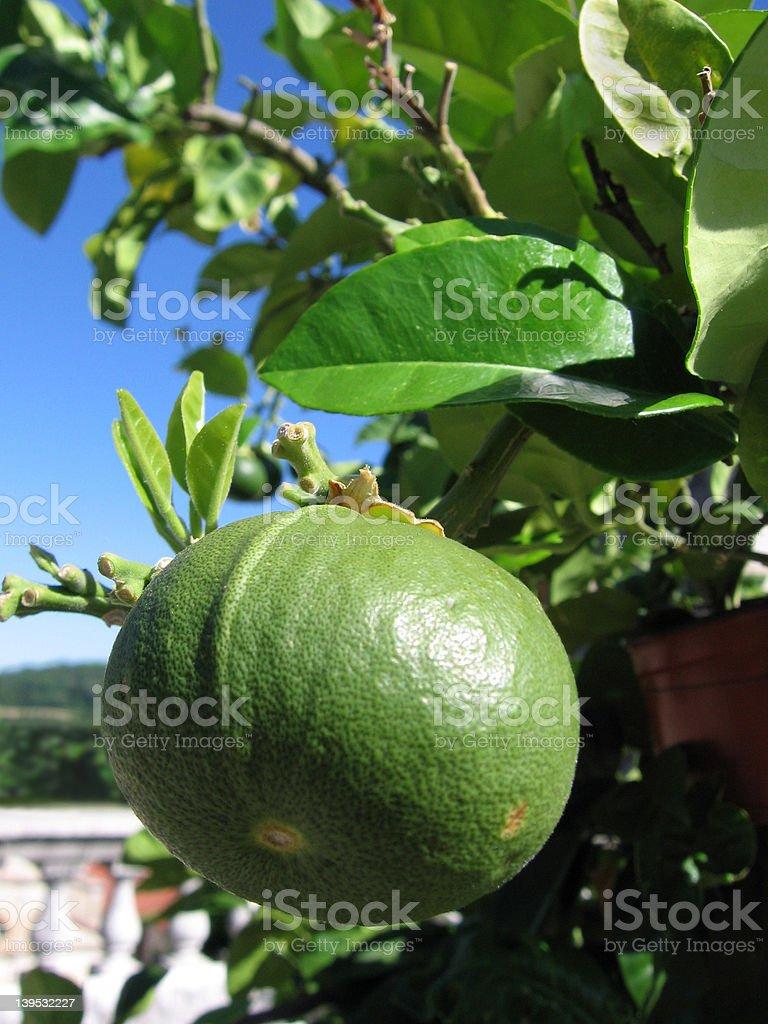 The bergamot fruit stock photo