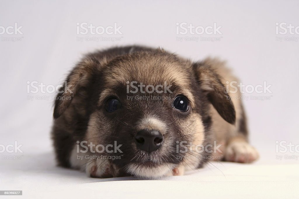 The best friend royalty-free stock photo