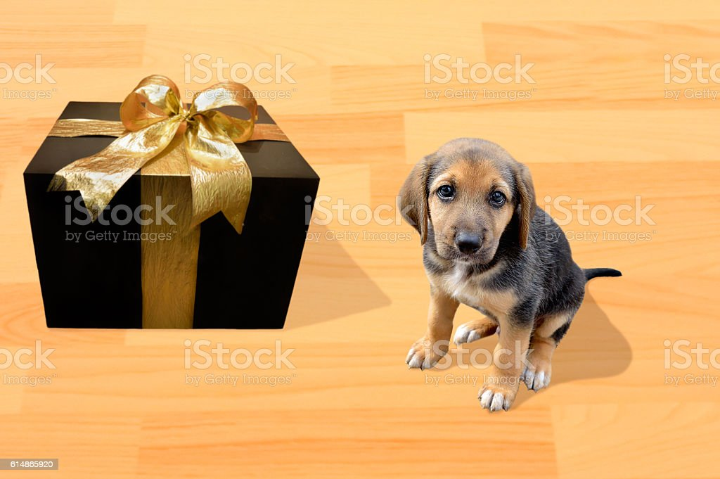 the best gift is my doggie stock photo