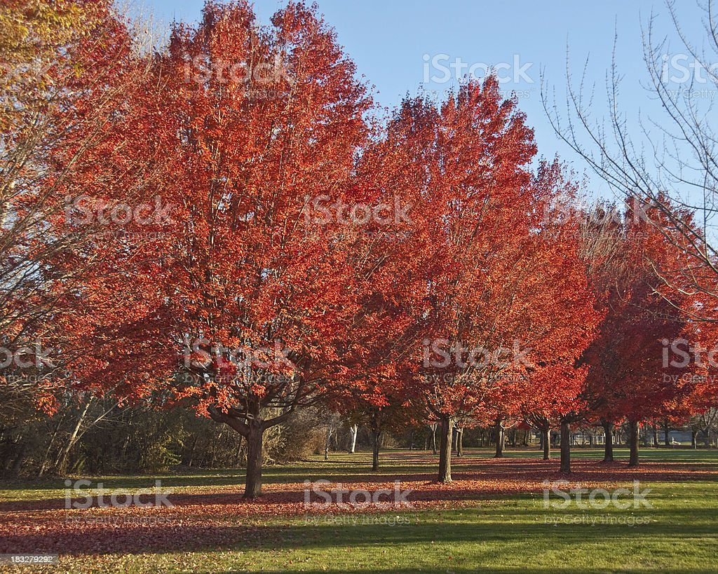 Fall Colors at the Arboretum stock photo