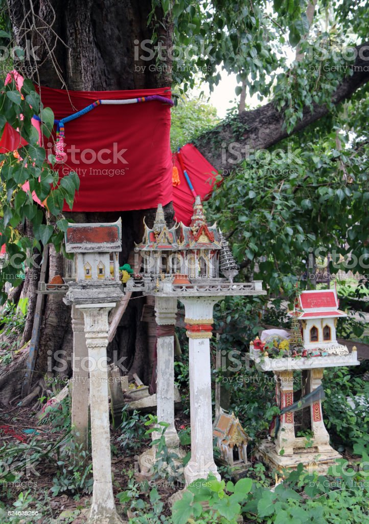 The big sacred fig Tree with red cloth Roll around the trunk. stock photo