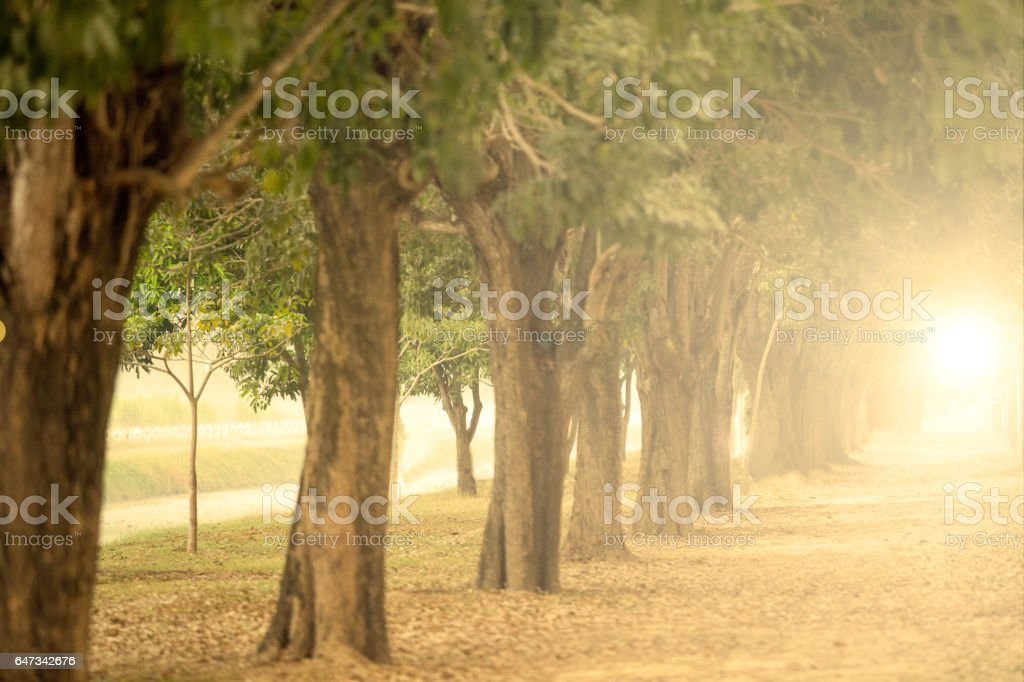 The big trees on both sides. stock photo