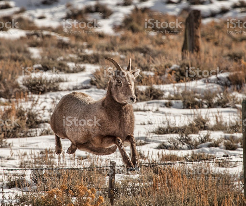 The Bighorn Ballerina stock photo