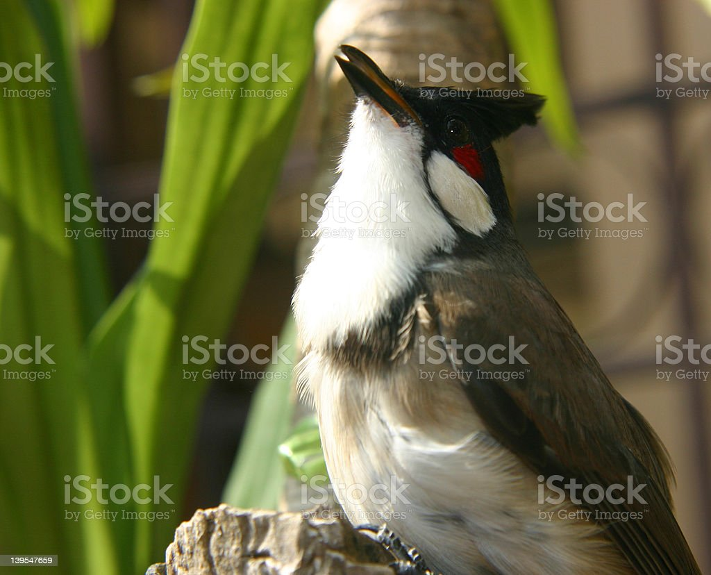The Bird 02 stock photo