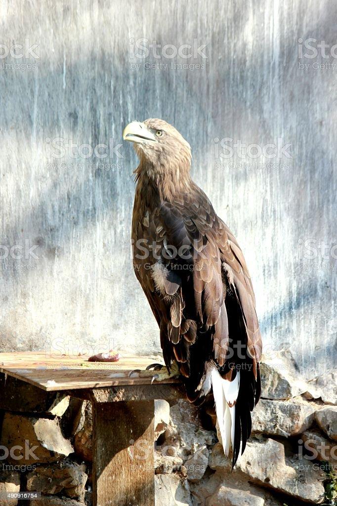 the bird stock photo