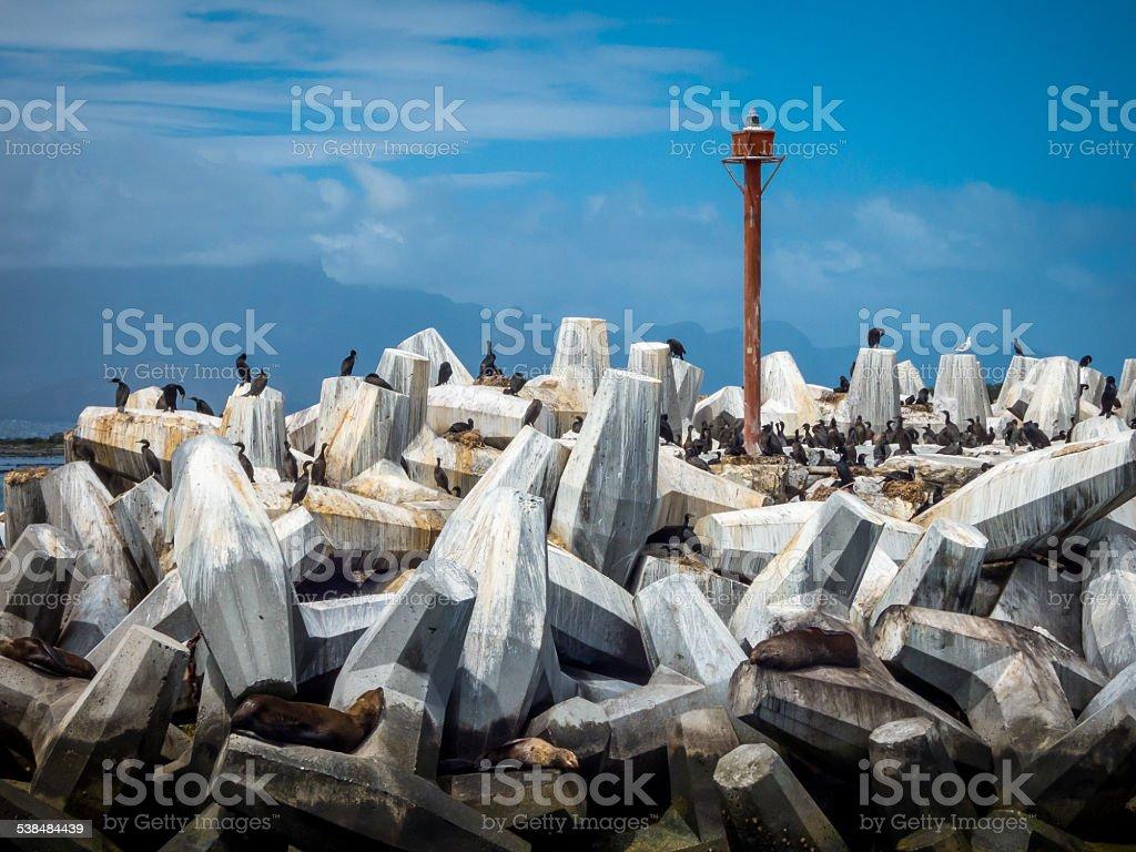 The Bird Watchers and Seals of Robben Island stock photo