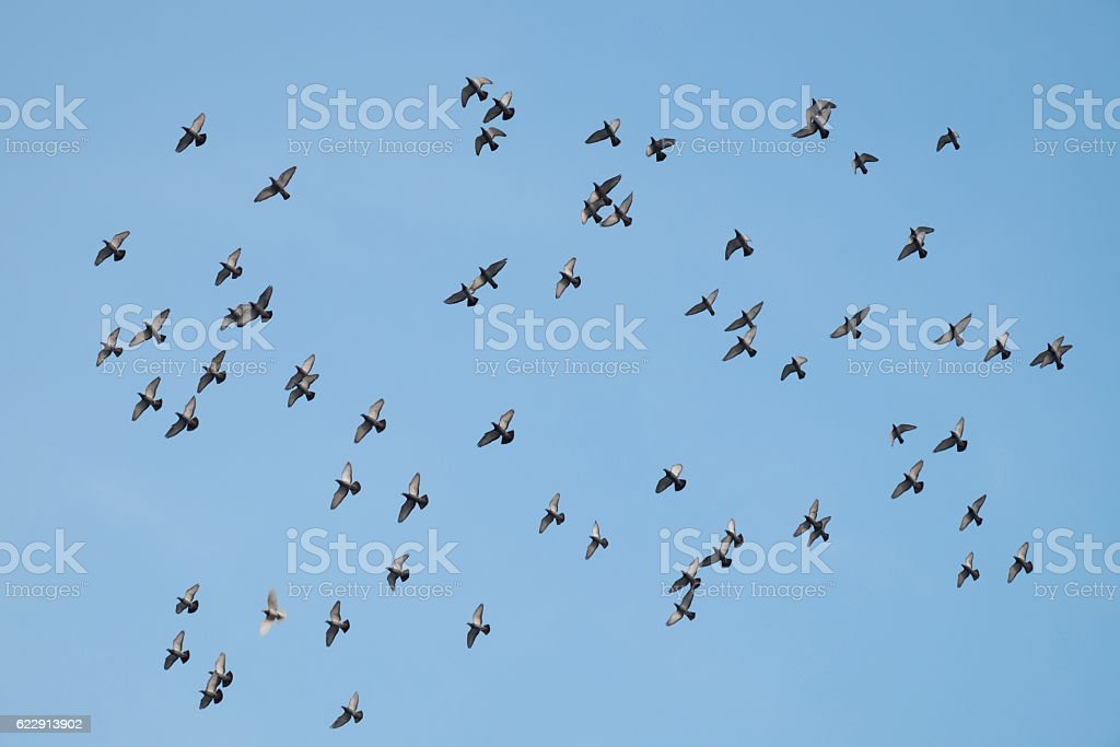 The birds are flying. stock photo