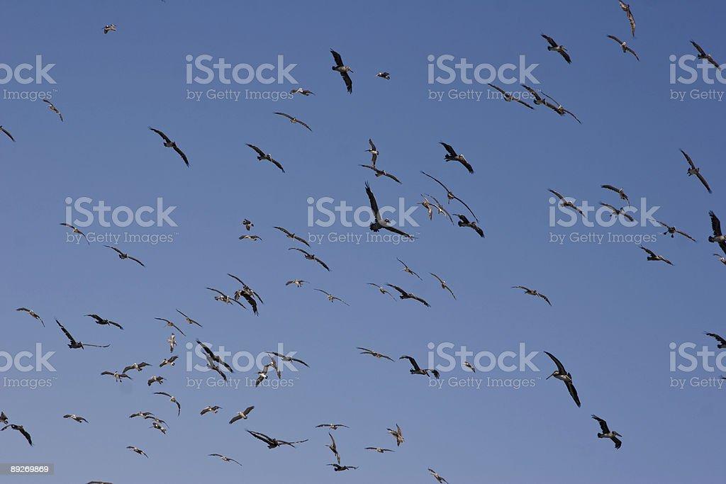 The Birds royalty-free stock photo