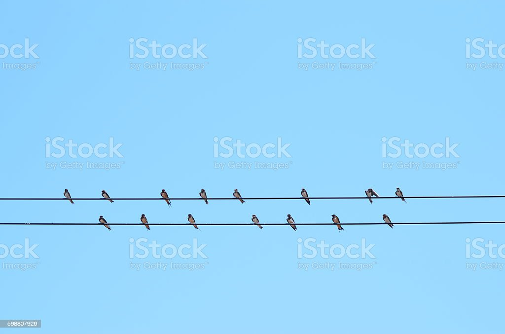 the birds standing on the power lines stock photo