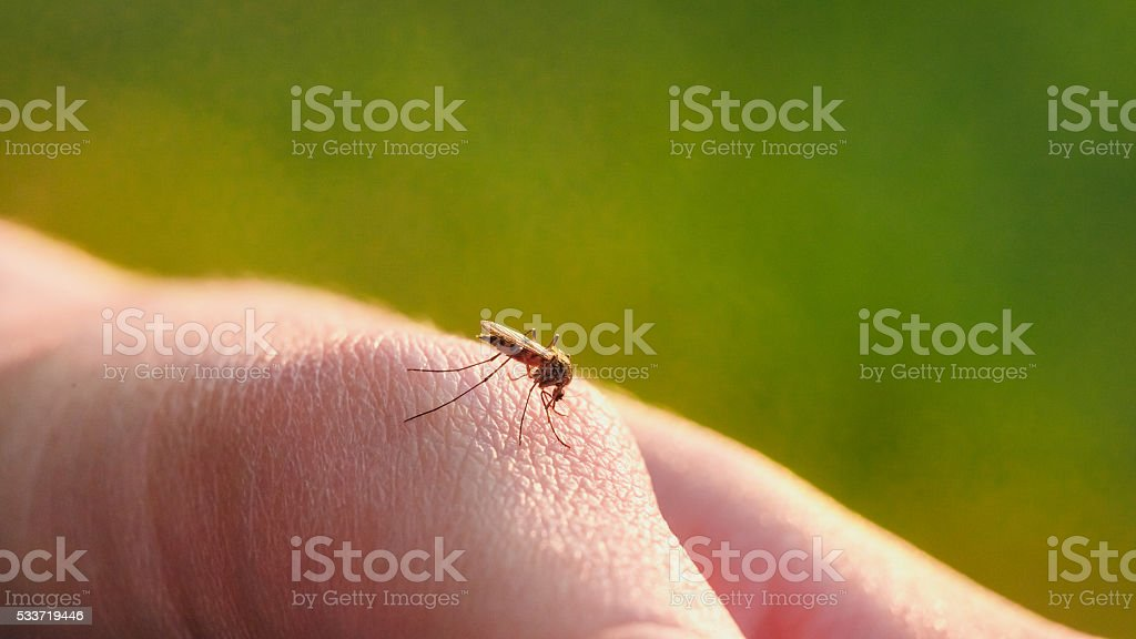 The bite of a mosquito with blood on human body stock photo