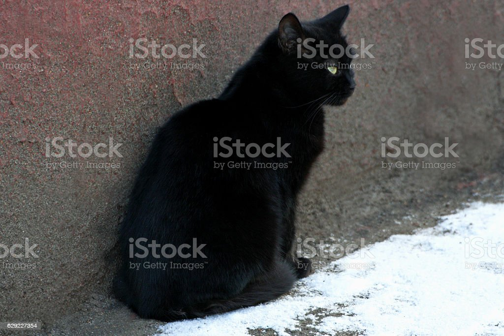 The black cat near the wall of the house. stock photo