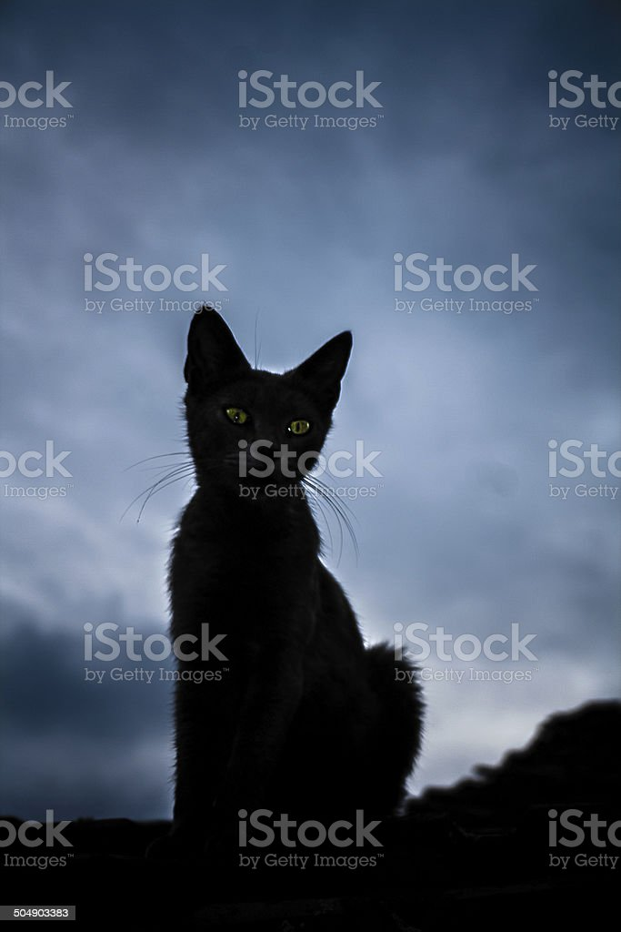 The Black cat stock photo