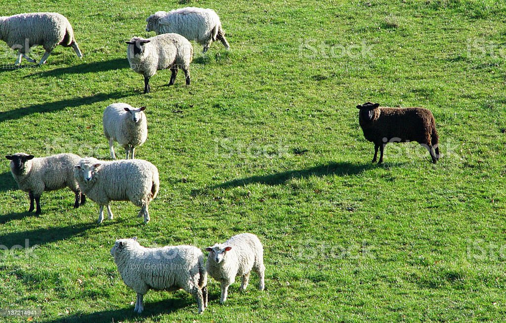 the black sheep royalty-free stock photo