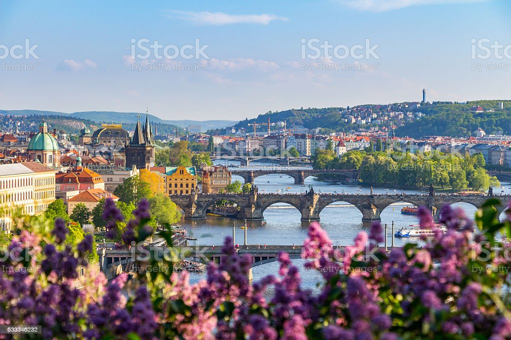 The blooming bush of lilac against Vltava river, Charles bridge stock photo