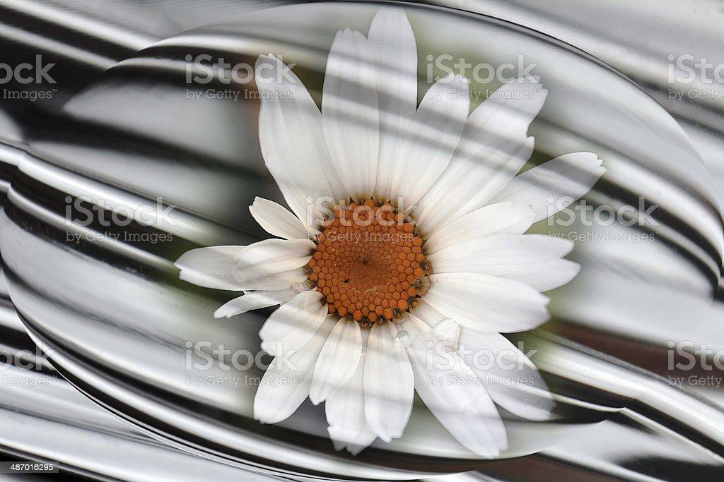 the blossom stock photo