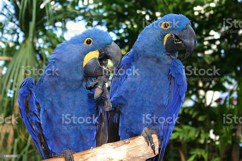 The Blues Brothers stock photo