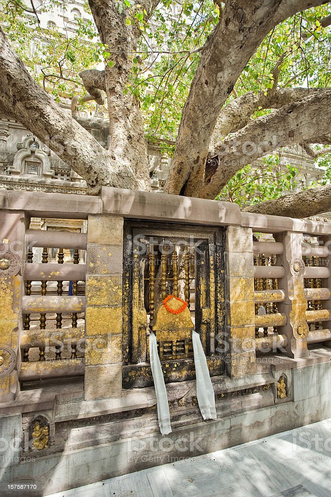 The Bodhi Tree stock photo