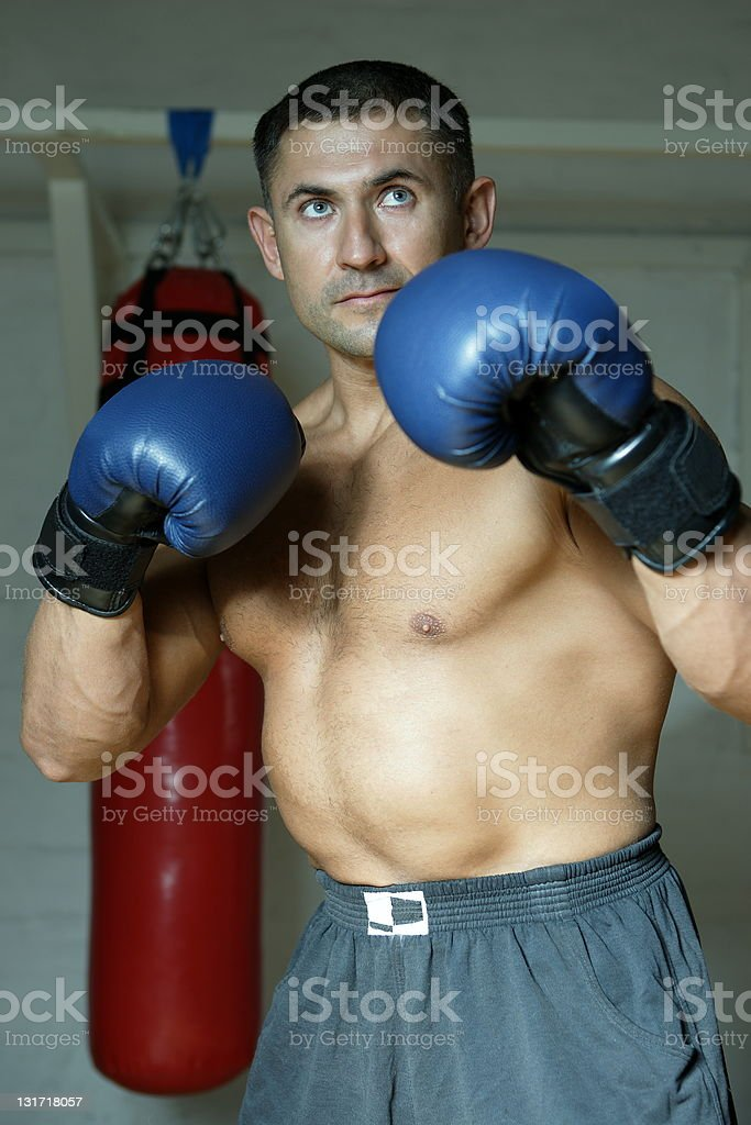 The boxer royalty-free stock photo