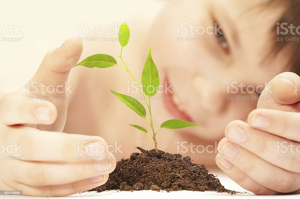 The boy and young plant. royalty-free stock photo