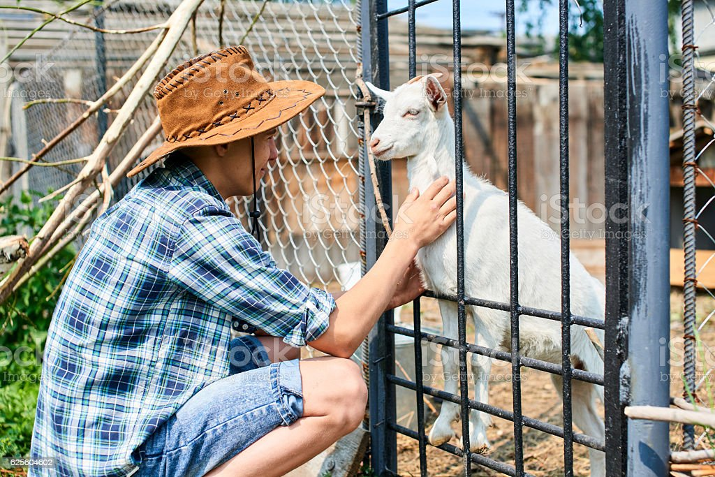 The boy in the hat petting a baby goat stock photo