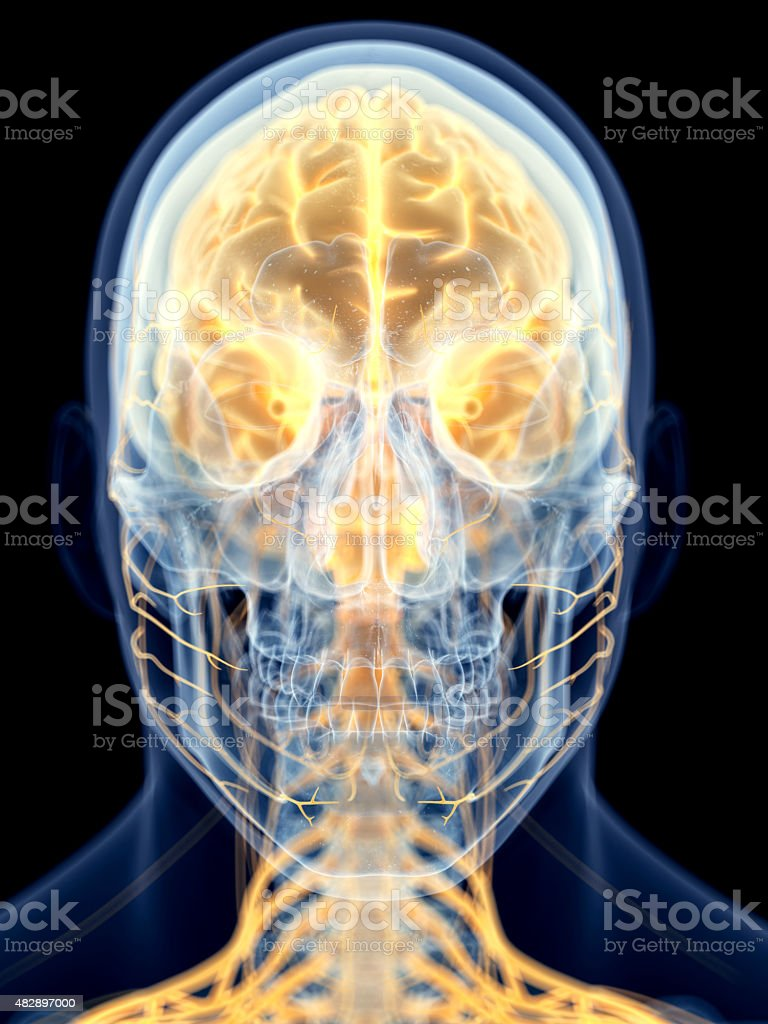 the brain stock photo